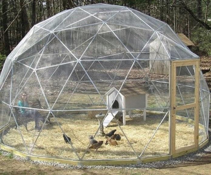 Geodesic Chicken Dome