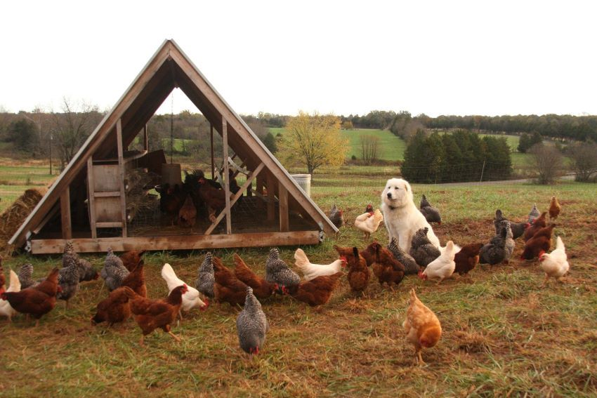Home for chicken On The Pasture