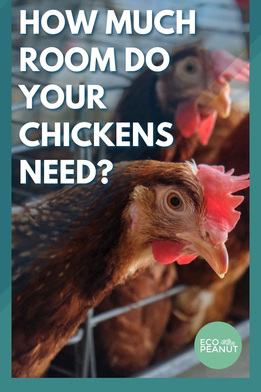 chicken room