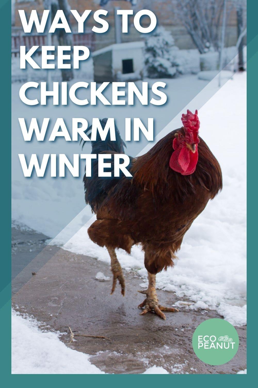 ways to keep chicken warm in winter