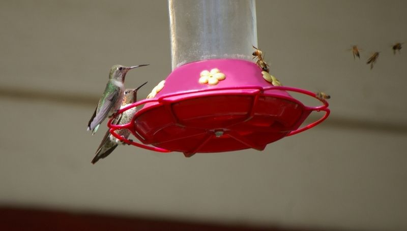 a red hummingbird feeder with two birds on the left side and multiple bees on the right