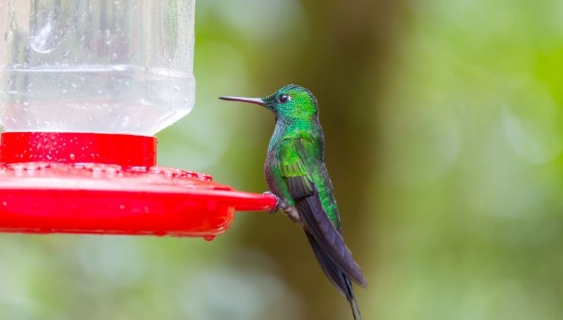 a bright green hummingbird standing on a leak-free red feeder