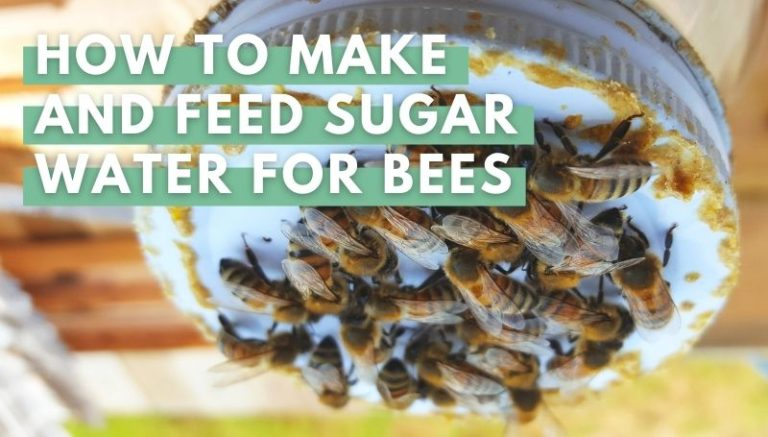 How to Make and Feed Sugar Water For Bees