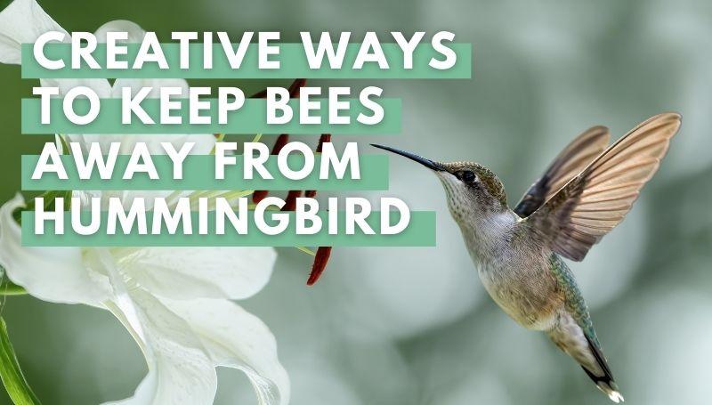 Creative Ways to Keep Bees Away from Hummingbird