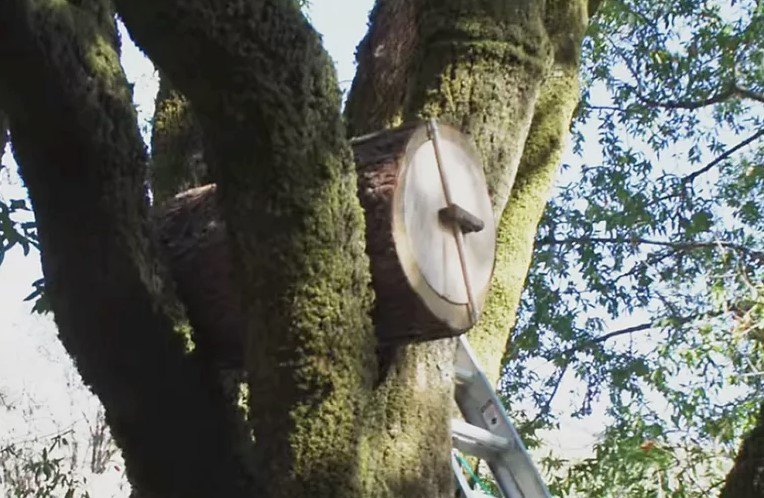 DIY Log Hive For Healthier Bees