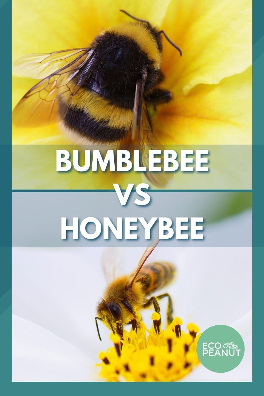 bumblebee vs honeybee