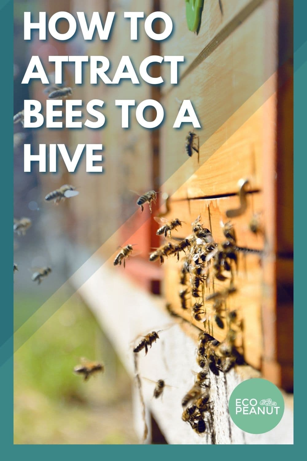how to attract bees to a beehive