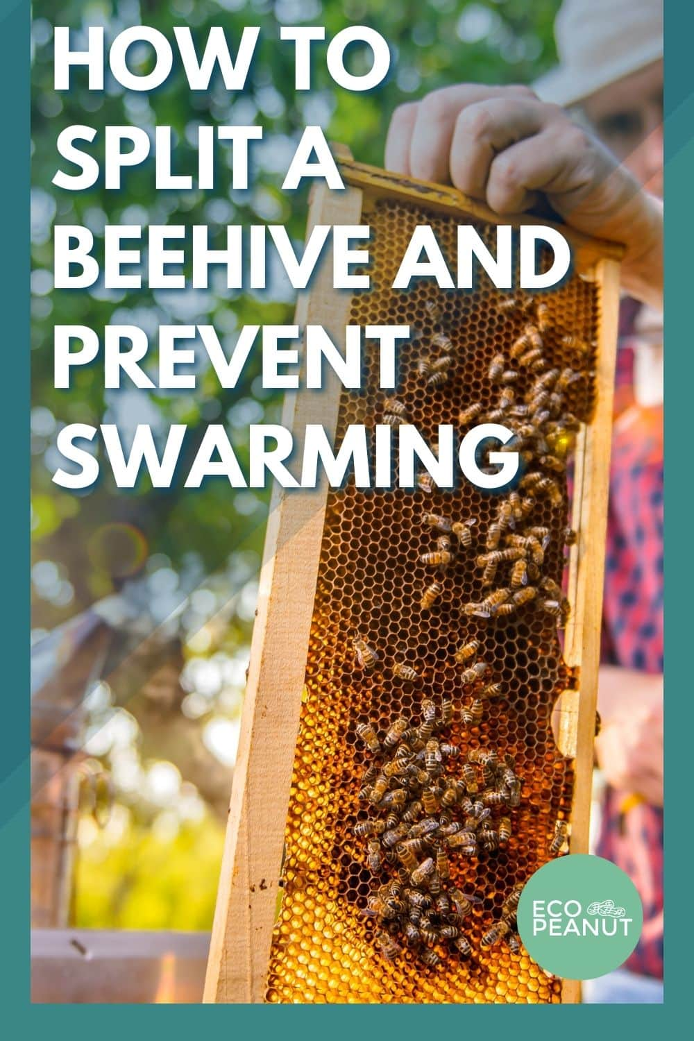 how to spit a beehive