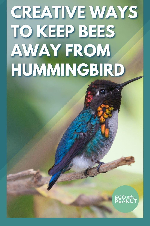 creative ways to keep bees away humming birds