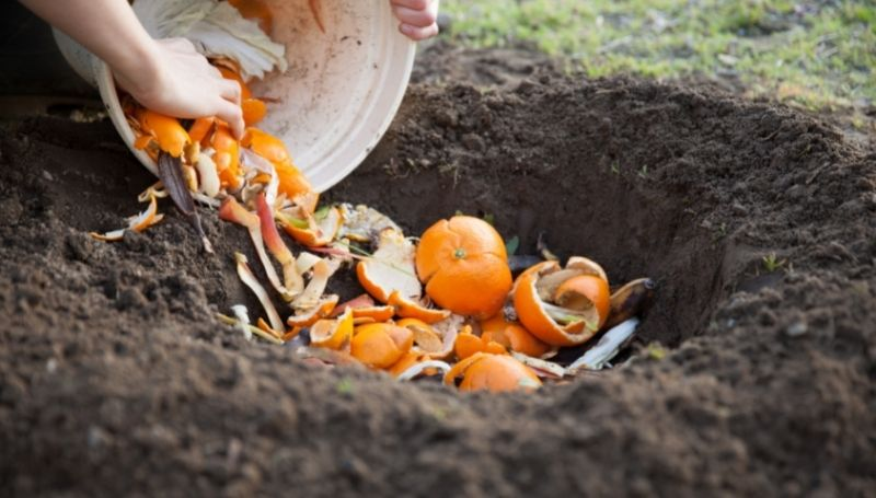 fruit peels and other food scraps being buried underground to make compost