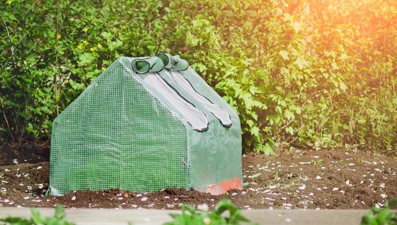 small greenhouse with green cover and rolled up windows in the backyard