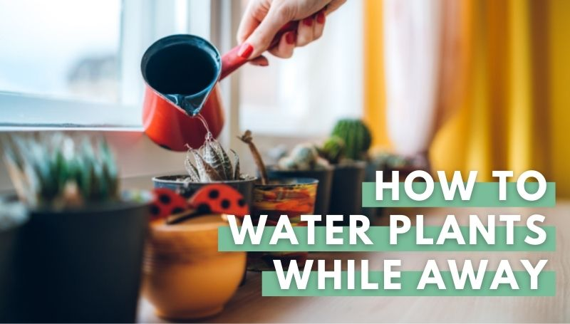 how to water plants while away
