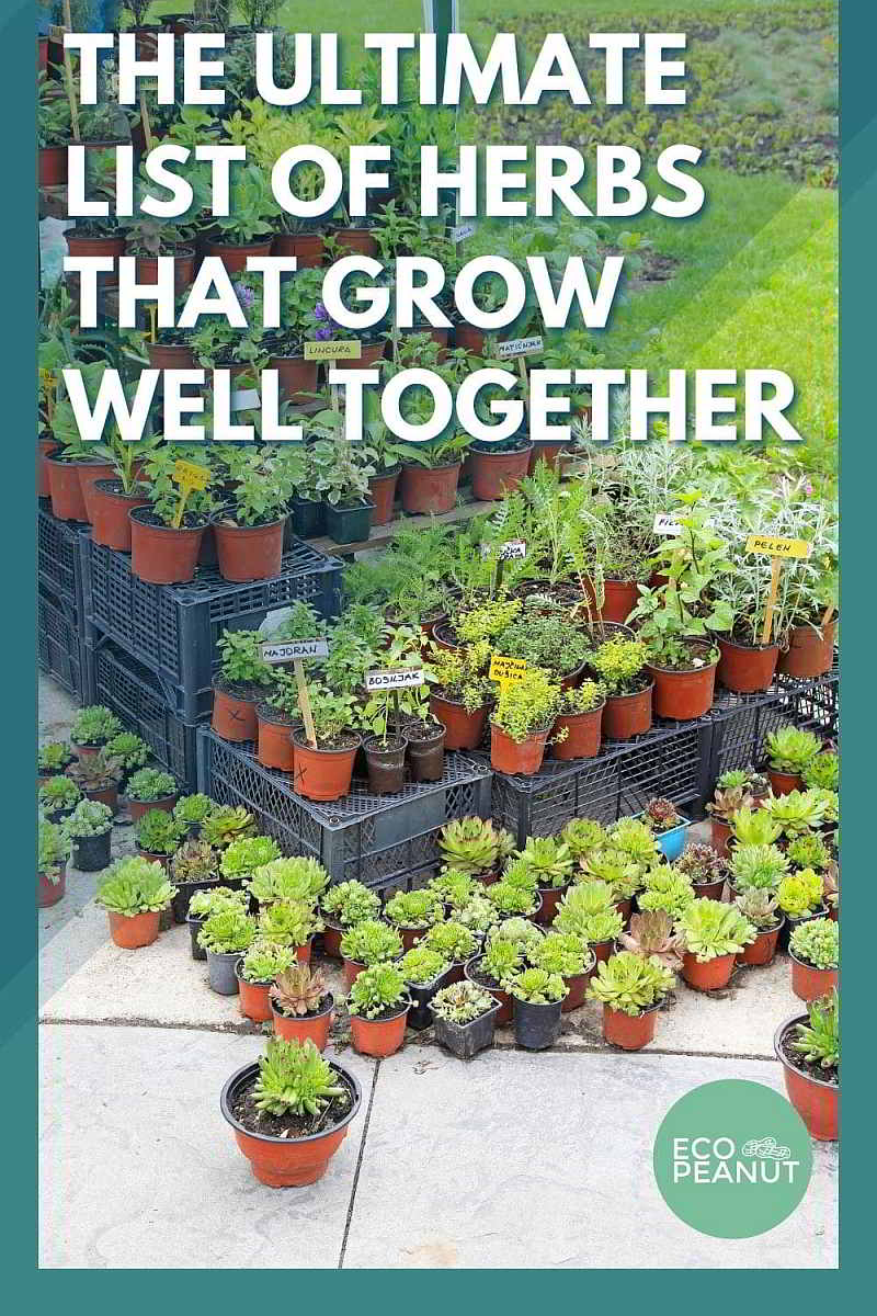 The Ultimate List of Herbs That Grow Well Together