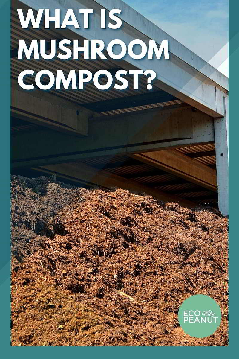 What Is Mushroom Compost?
