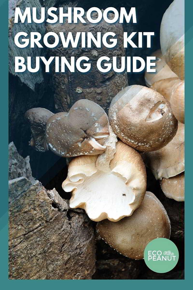 Mushroom Growing Kit Buying Guide