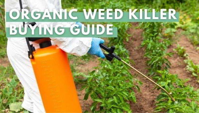 organic weed killer buying guide